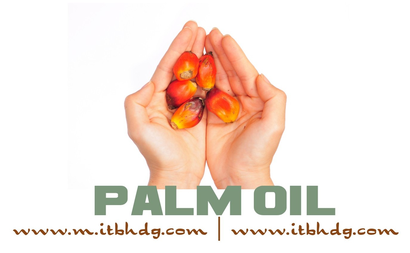 Palm oil is the most widely consumed vegetable oil on the planet, and it is in about half of all packaged products sold in the supermarket | www.m.itbhdg.com