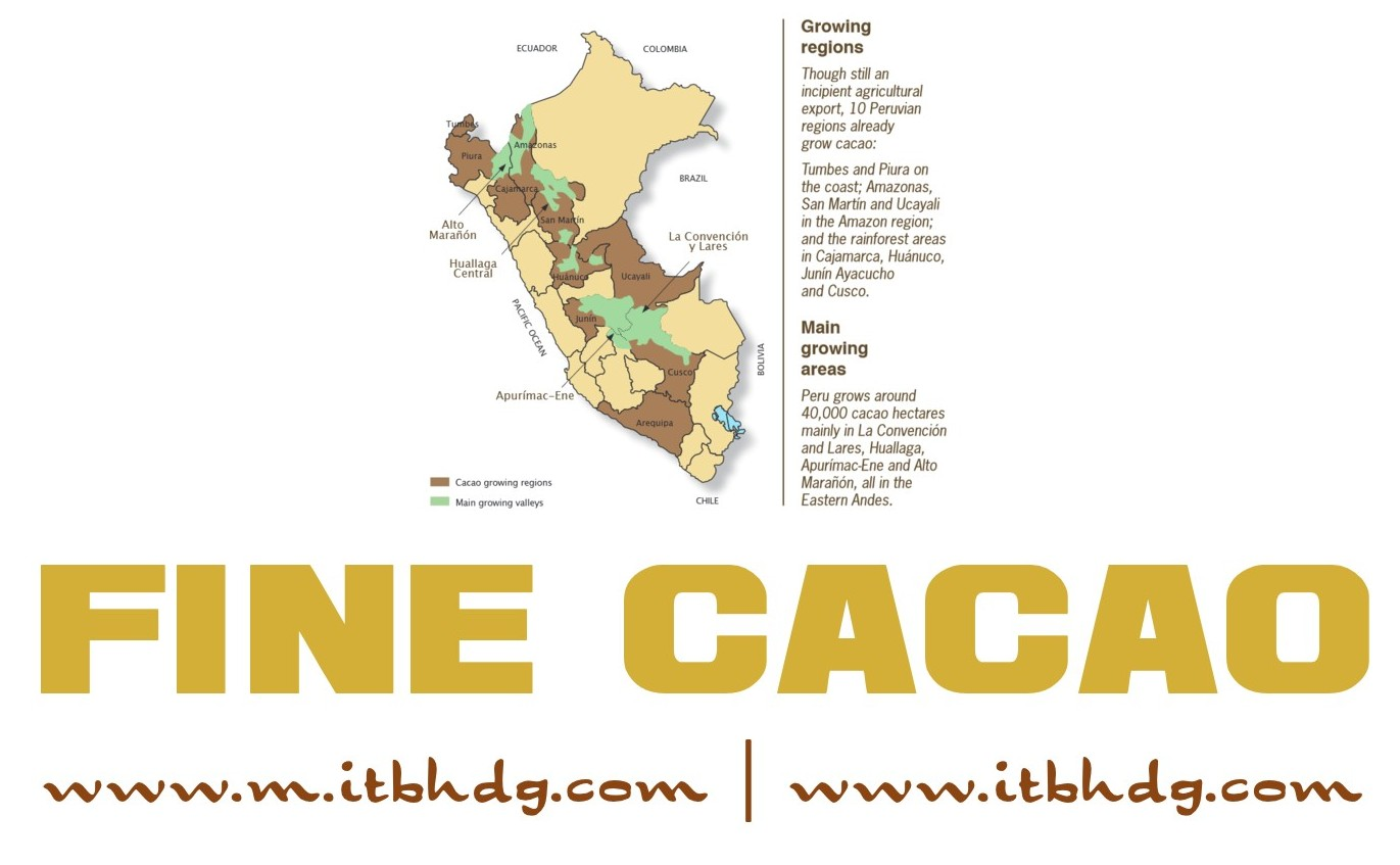 Cacao | Cocoa | Organic | Raw Beans | Various countries around the world | Best CIF (Cost, Insurance, Freight) prices | www.m.itbhdg.com | www.itbhdg.com